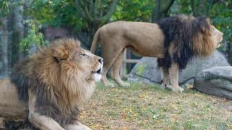 De fabel van homoseksualiteit bij dieren